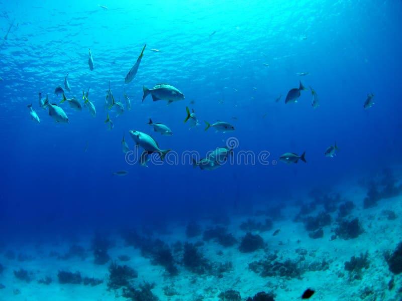 błękitny underwater obraz royalty free
