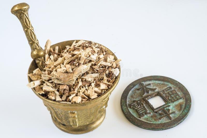 Błękitny wiecznozielony hortensja korzeń, Dichroa febrifuga obrazy royalty free