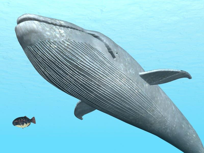 Błękitny wieloryb royalty ilustracja