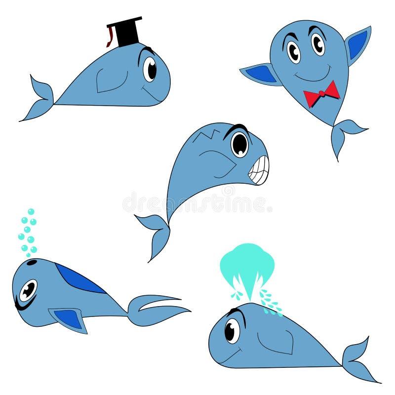 błękitny wieloryb zdjęcia royalty free