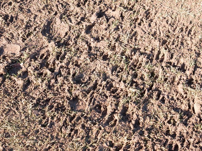 błotnistej ścieżki kraju rolnictwa tekstury stopy podłogowi druki obrazy stock