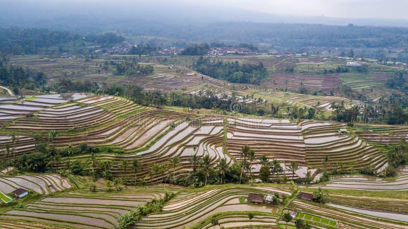Błotnisty ryż tarasuje panoramę w Bali obrazy stock