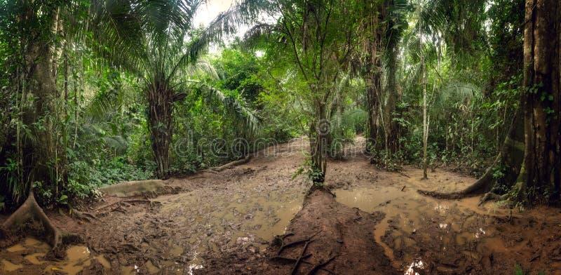 Błotnisty spacer przez amazonka tropikalnego lasu deszczowego zdjęcie royalty free