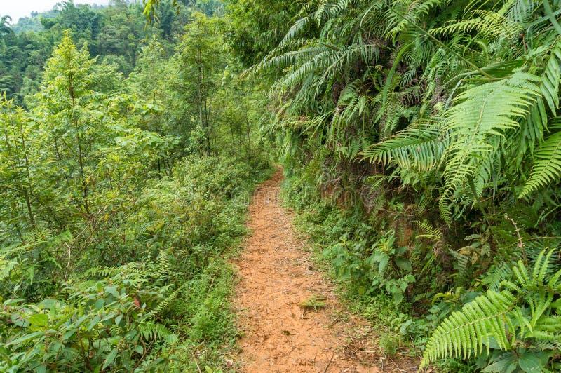 Błoto ślad, wycieczkuje ścieżkę wśród tropikalnych rośliien obrazy royalty free