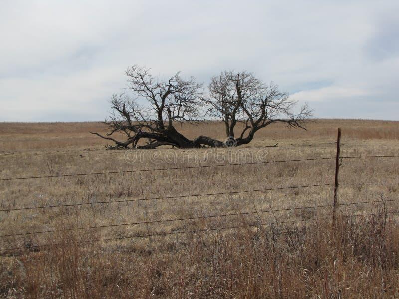Błyskawicowy drzewo obrazy royalty free