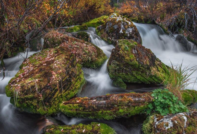 Błyskawiczny strumień i spadać liście na skałach obrazy royalty free