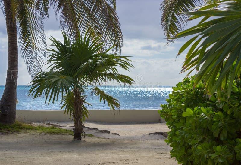 Błyskotliwy morze karaibskie ustawia oszałamiająco tło i ulistnienie na brzeg Ambrowy Caye drzewka palmowe, Belize obraz royalty free