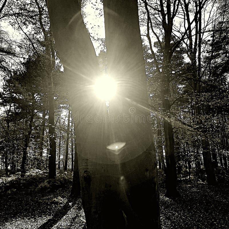 Błyszczeć Przez drzew fotografia royalty free