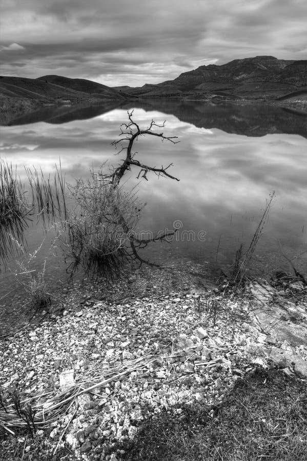 B&W del pequeño árbol en agua. fotos de archivo libres de regalías