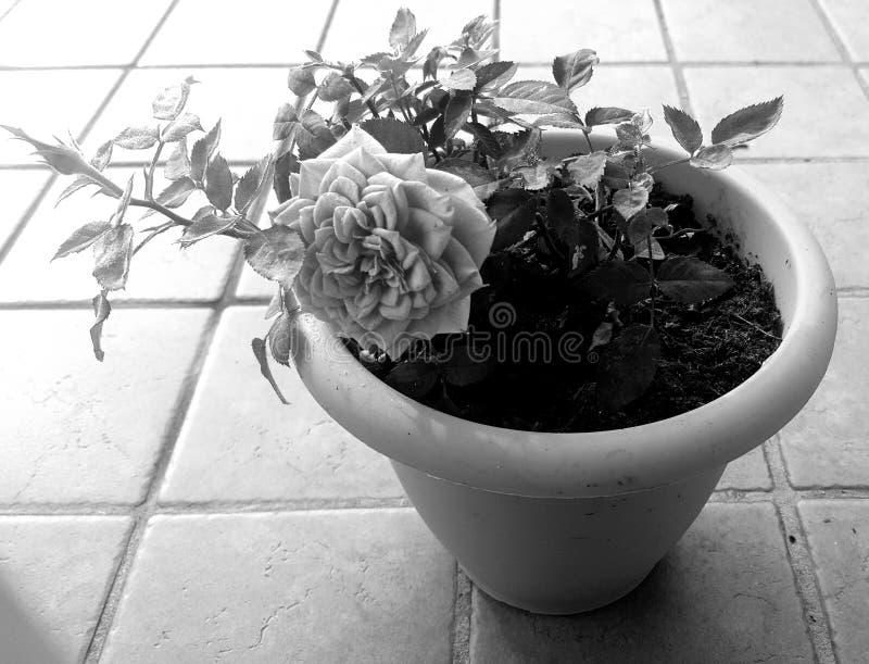b-blomma w royaltyfria foton