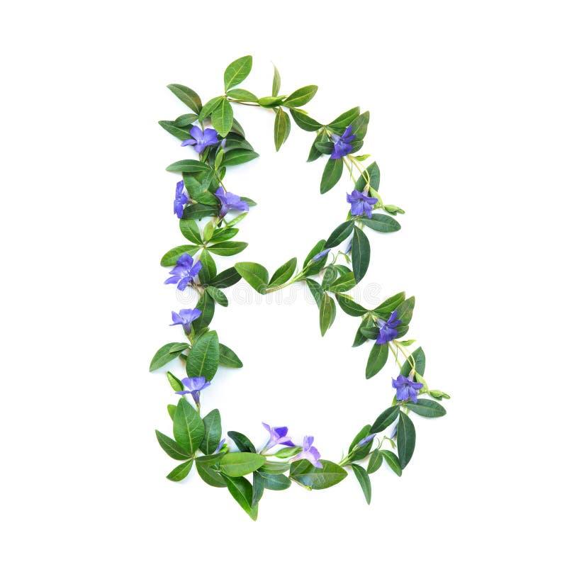 B, brief van het alfabet van bloemen op witte achtergrond wordt geïsoleerd die De brief van bloemen en bladeren van maagdenpalm G stock afbeeldingen