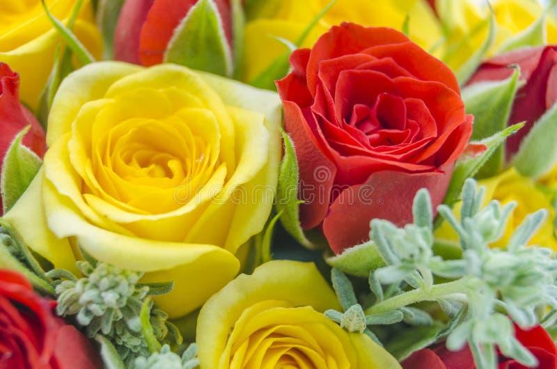b bukiet róż w violet ton obraz stock