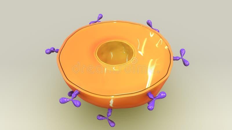 B-cell stock illustrationer