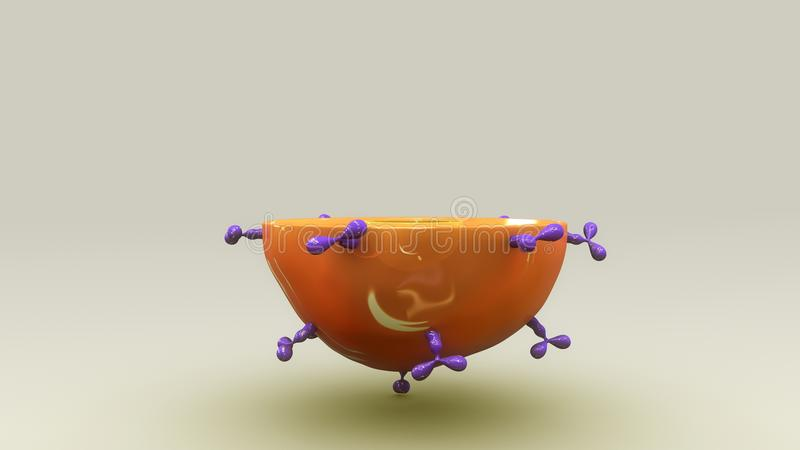 B Cell stock illustration
