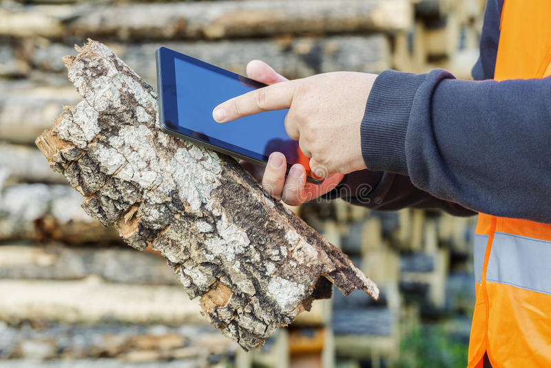 Bûcheron à l'aide de la tablette dans les bois photos stock