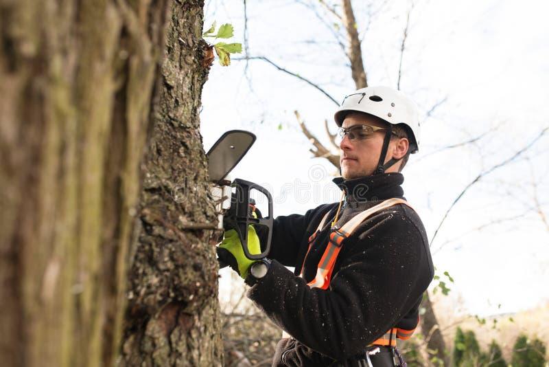 Bûcheron avec l'élagage de tronçonneuse et de harnais un arbre image libre de droits