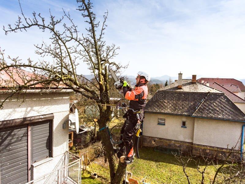 Bûcheron avec l'élagage de tronçonneuse et de harnais un arbre image stock