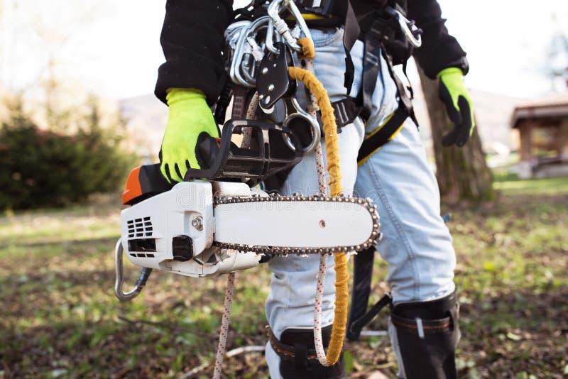 Bûcheron avec le harnais et la tronçonneuse prêts à tailler un arbre photographie stock libre de droits