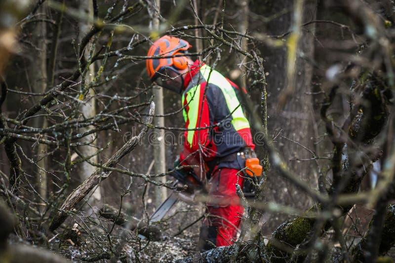 Bûcheron dans les bois image libre de droits