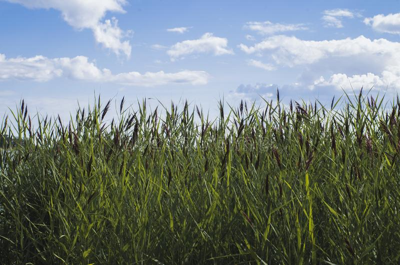 b??kit chmurnieje trawy zieleni niebo obrazy stock