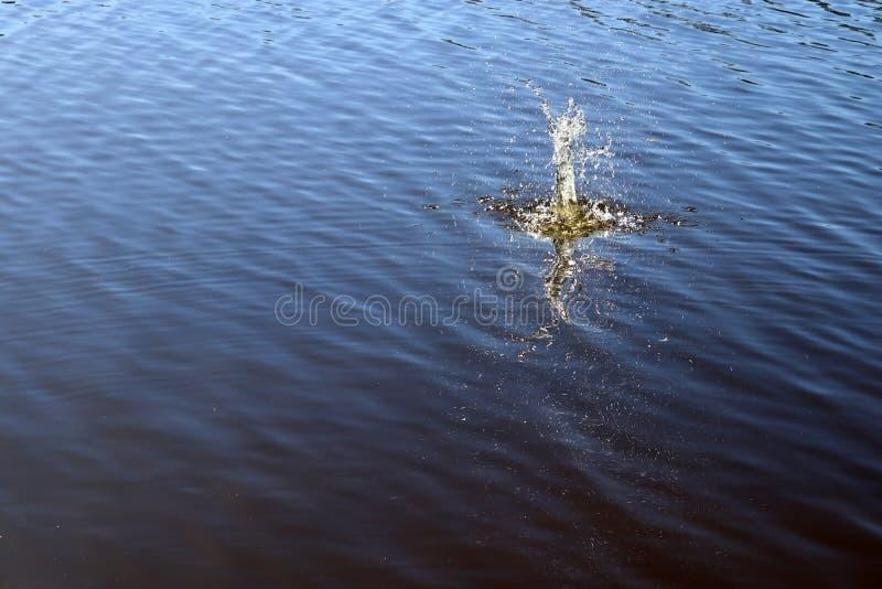 B??kitna jezioro wody powierzchnia z czochrami i che?botanie rzecz? spada w je podczas gdy odbijaj?cy ?wiat?o s?oneczne obraz royalty free