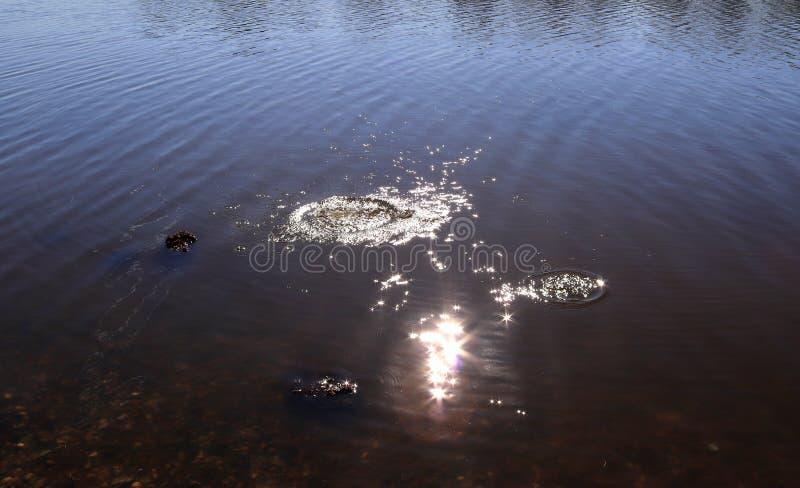 B??kitna jezioro wody powierzchnia z czochrami i che?botanie rzecz? spada w je podczas gdy odbijaj?cy ?wiat?o s?oneczne fotografia stock