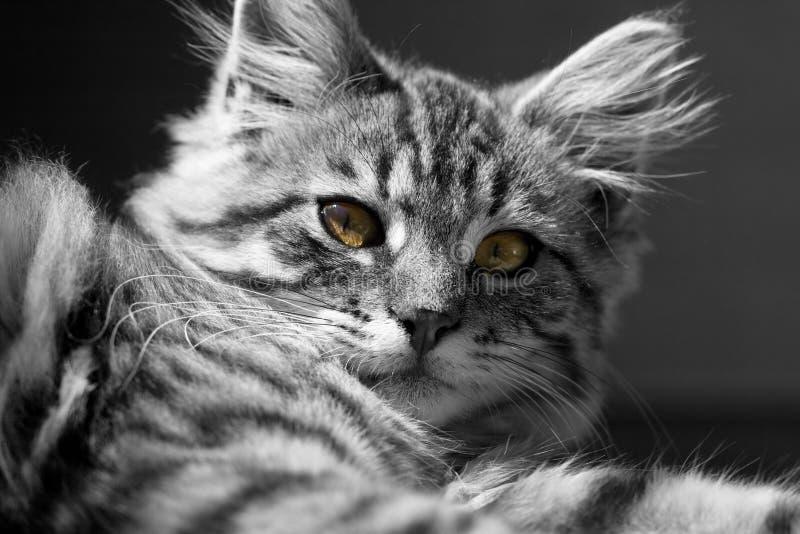 b kot w fotografia stock