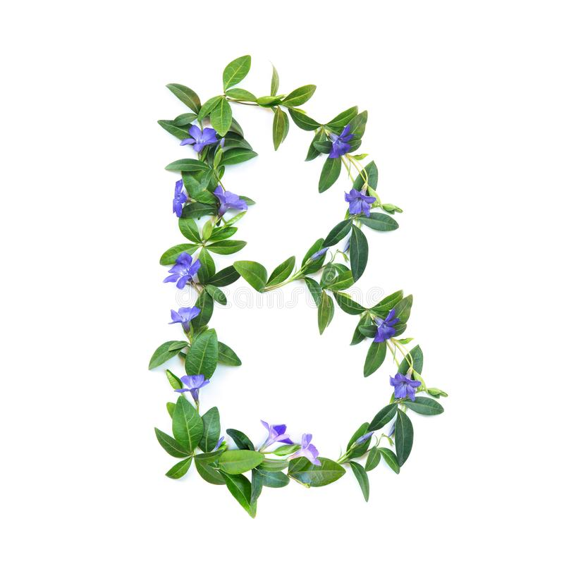 B, letter of the alphabet of flowers isolated on white background. The letter of flowers and leaves of periwinkle. Green and stock images