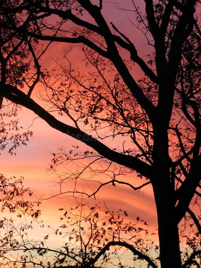 <b>Que noite dolorosa colorida</b> fotografia de stock