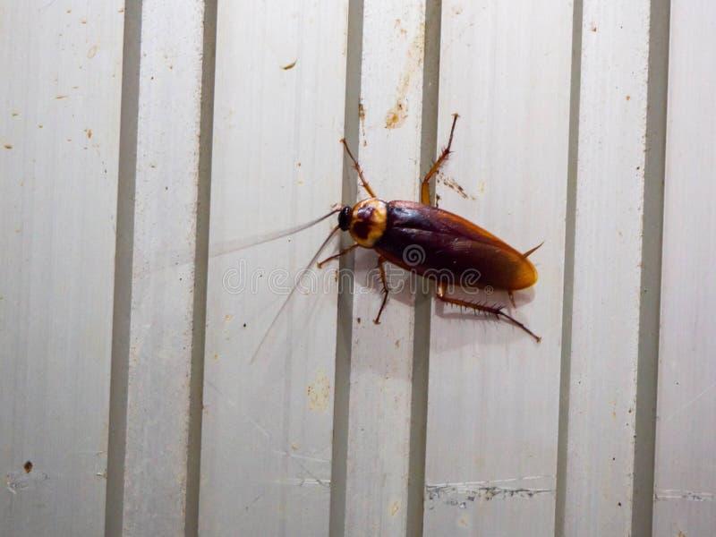 B?sta sikt en d?d kackerlacka p? vit bakgrund royaltyfria bilder