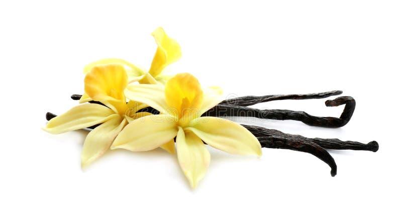 B?tons et fleurs aromatiques de vanille sur le blanc photos libres de droits