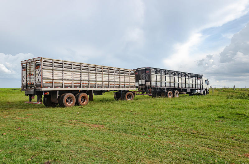 B-train truck on farm doing the transport of cattle. ELDORADO, BRAZIL - FEBRUARY 26, 2017: B-train truck on farm doing the transport of cattle royalty free stock image