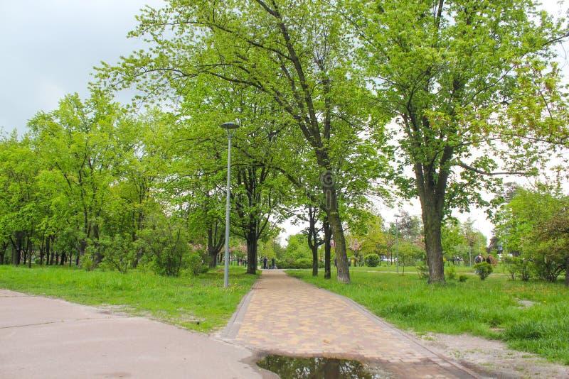 B?ume des Waldes Gr?ne h?lzerne Sonnenlichthintergr?nde der Natur Grüner Park, Bahnen für Urlauber, Wochenende stockbild