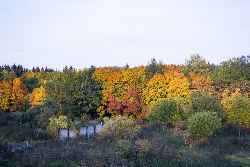 B?ume im Fall Autumn Colors Die Schönheit der Waldahornbäume stockbild