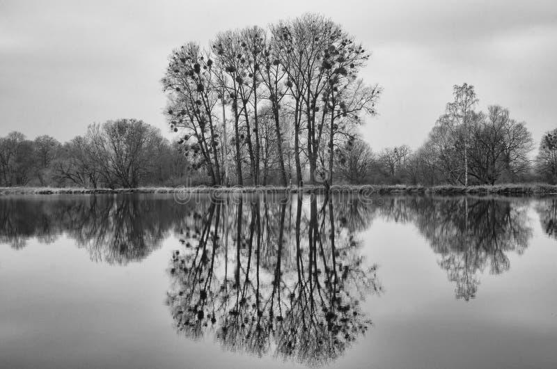 B&W γραπτή ομάδα δέντρων με την αντανάκλαση στην επιφάνεια νερού της ήρεμης λίμνης στοκ εικόνα με δικαίωμα ελεύθερης χρήσης