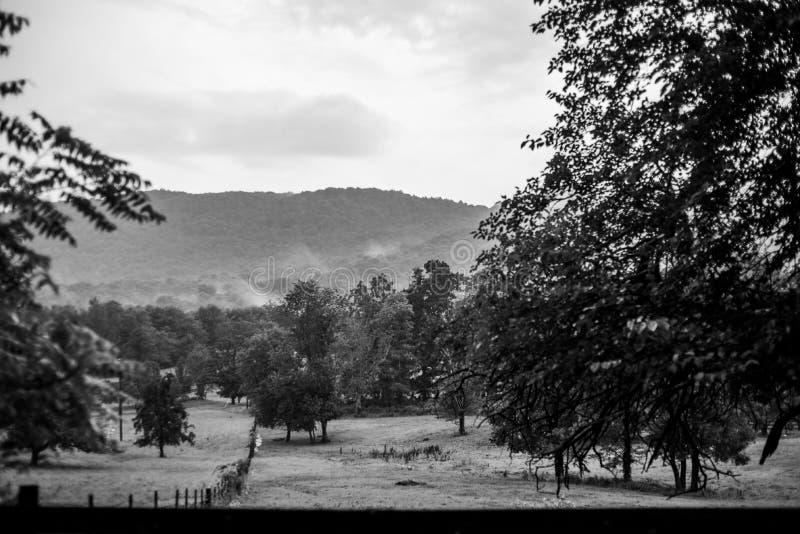 B&W del paesaggio della montagna con gli alberi e le nuvole fotografia stock libera da diritti