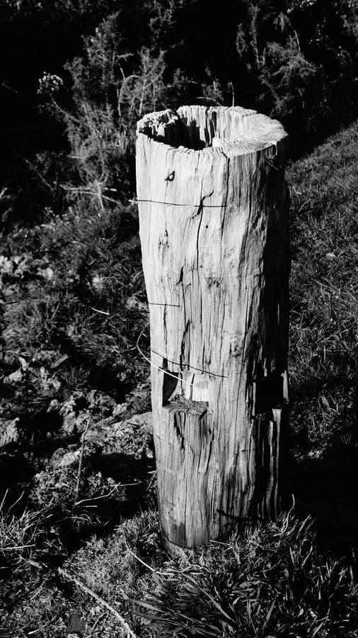 B&W des alten Bauernhofzaunbeitrags auf waikato Bauernhof stockfoto