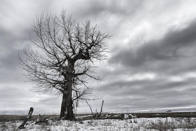 B&W dramático da árvore estéril fotos de stock royalty free