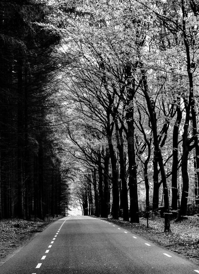 B&W fotografia brać blisko do De Hoge Veluwe parka narodowego zdjęcie stock