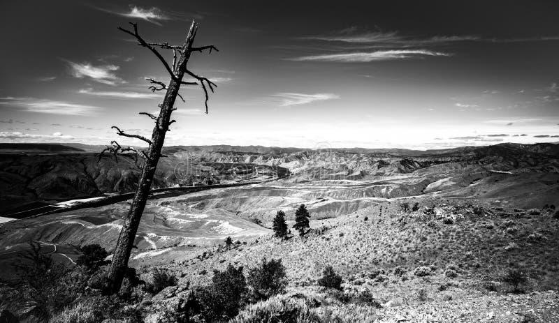 B&W krajobraz z nieżywym drzewem fotografia stock
