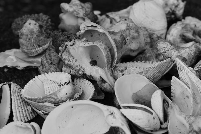 B&W Shells stock afbeelding