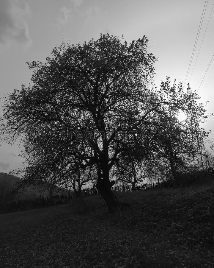 b&w tree stock images