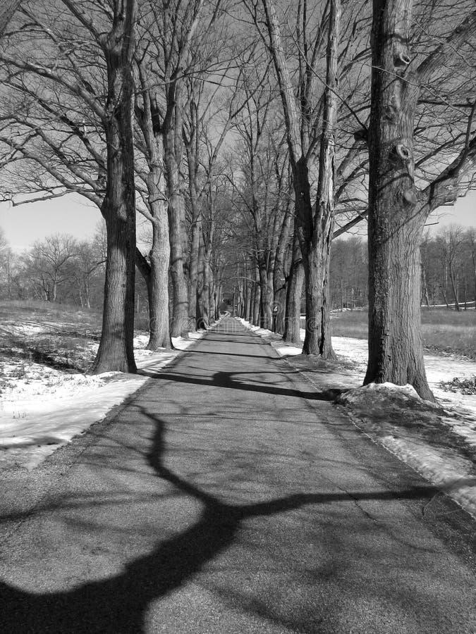 B/W Treeline fotos de archivo