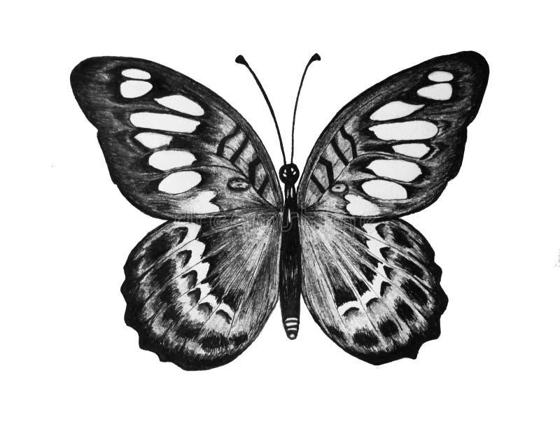 B&W vlinder royalty-vrije stock foto's