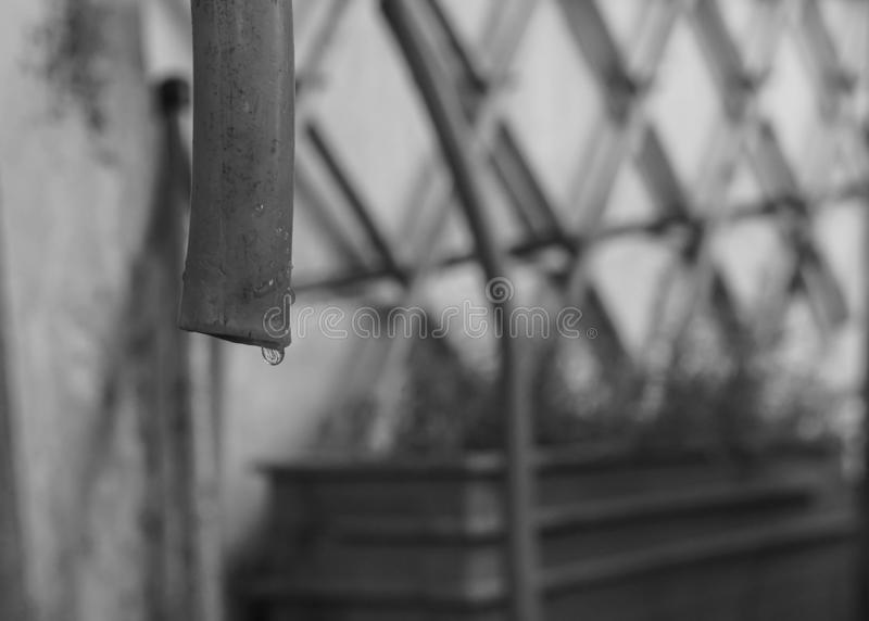 B&W water drops from rubber tube in home garden as droughts problem in global warming. Crisis stock photos