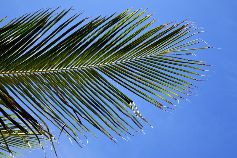 baía Ásia de tao do kho da folha no céu branco de Tailândia da árvore da ilha imagem de stock