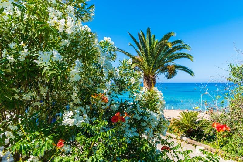 Baía de Paleokastritsa na ilha de Corfu, arquipélago Ionian, Grécia imagem de stock