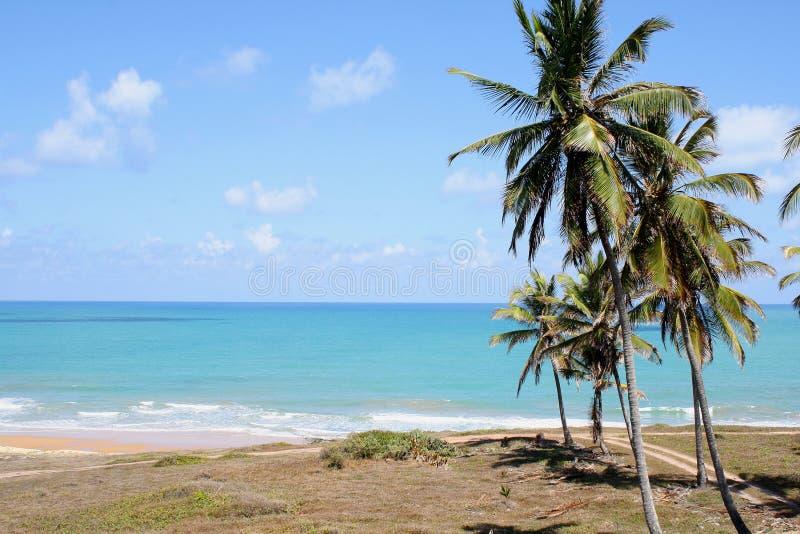 Baía Formosa. Brazil. Natal (RN stock photo