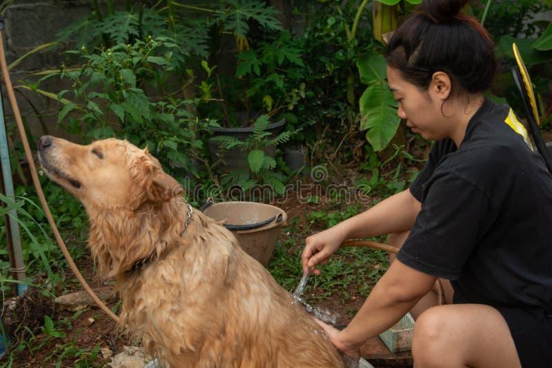 Bañando el perro, una mujer se está bañando para su golden retriever del perro fotografía de archivo libre de regalías