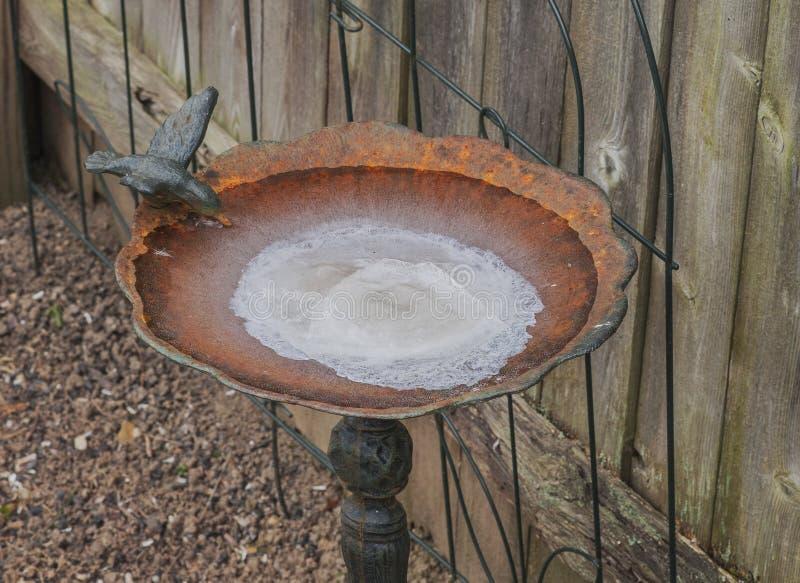 Baño congelado del pájaro fotos de archivo libres de regalías